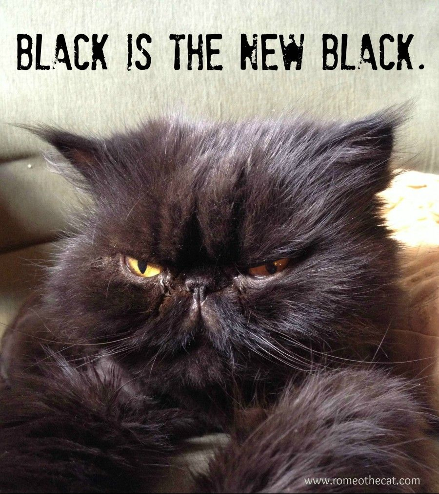 Happy Black Cat Day With Images Black Cat Appreciation Day Black Cat Day Black Cats Rock