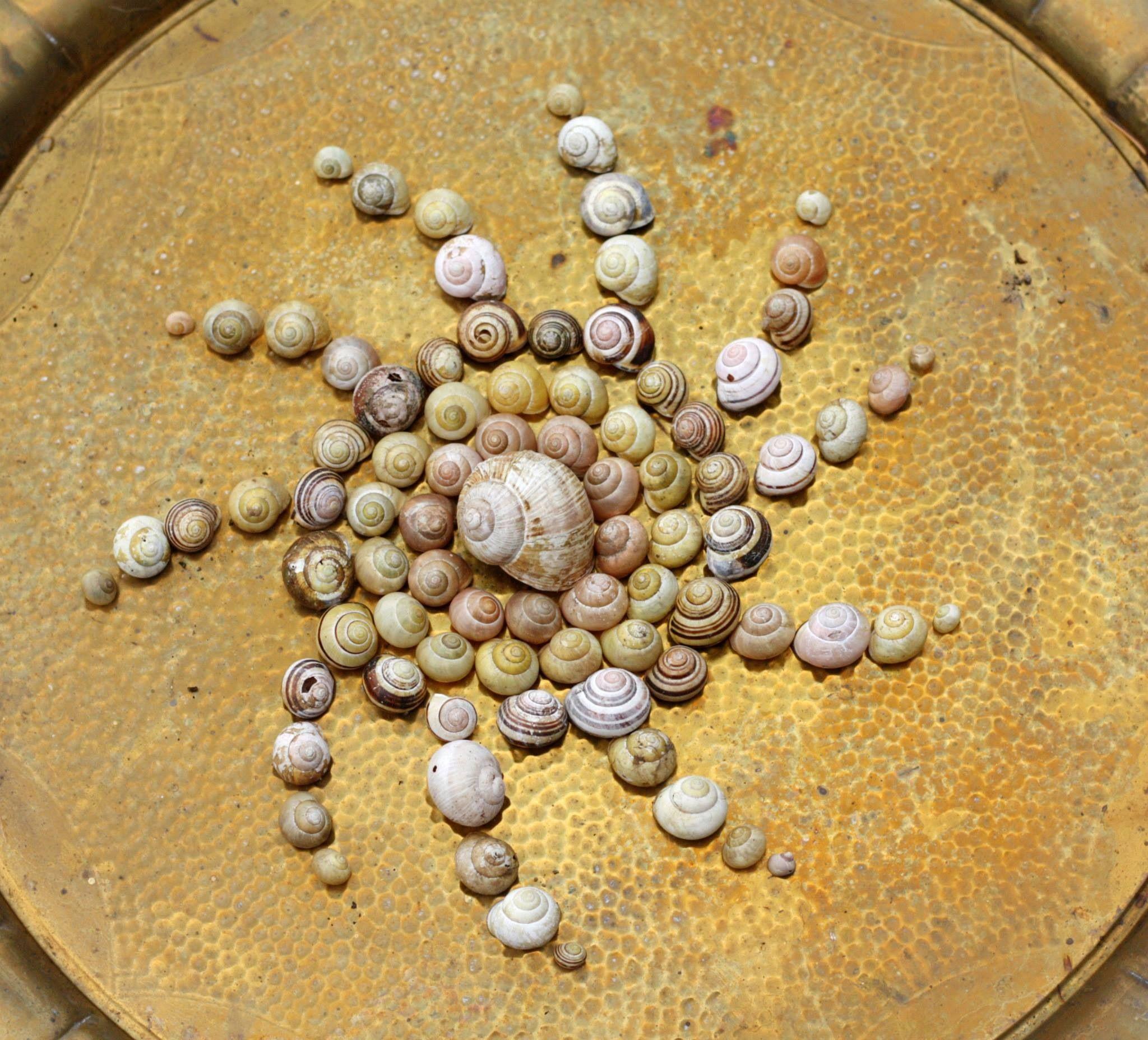Snail shells #Snail #Shell #Mandala