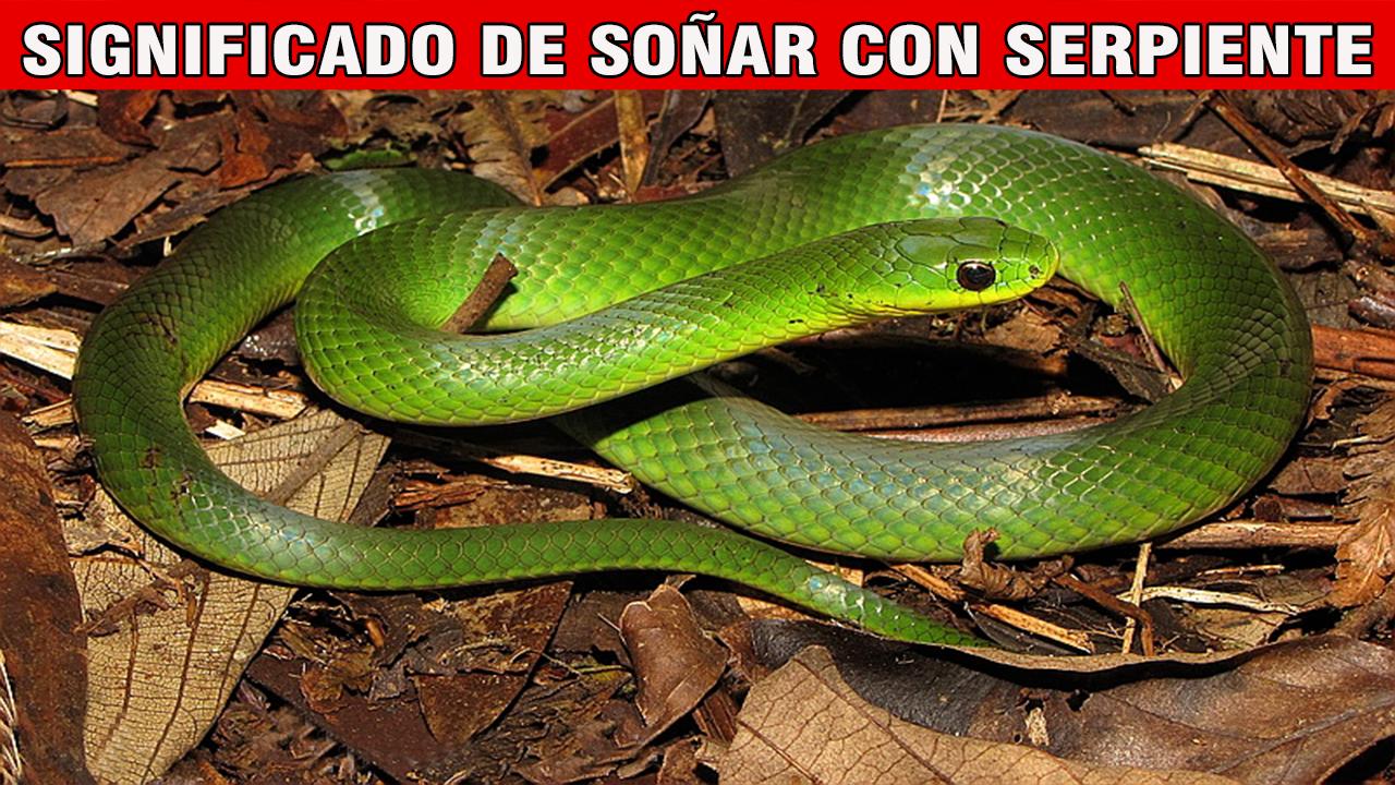 Que Significa Soñar Con Serpientes Significado De Los Sueños Rainforest Food Chain Food Chain Animals
