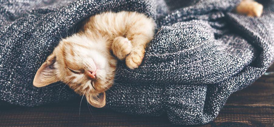 Eat Right for Better Sleep