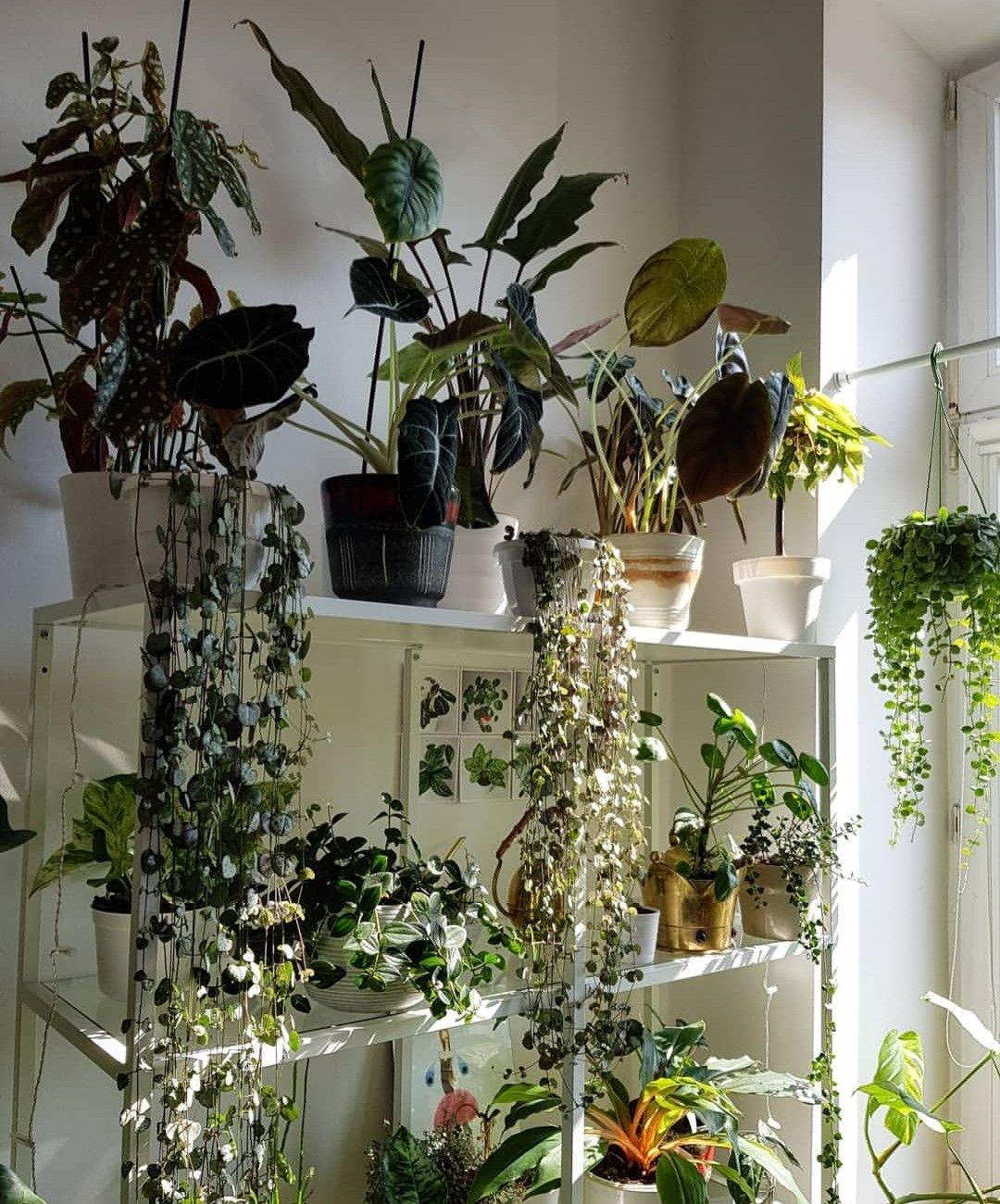 Pinterest Lilyxritter With Images House Plants Decor