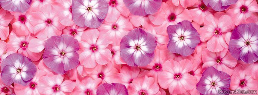 Pink Flowers Facebook Cover Flower Desktop Wallpaper Pink Flowers Wallpaper Cute Flower Wallpapers