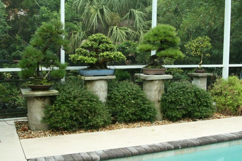 1000 images about Bonsai Garden on Pinterest Suzhou Pine and Trees