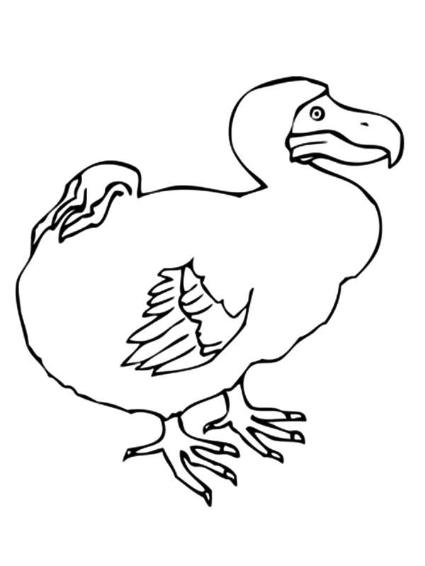 Dodo Bird Picture Coloring Pages - NetArt di 2020 (Dengan ...