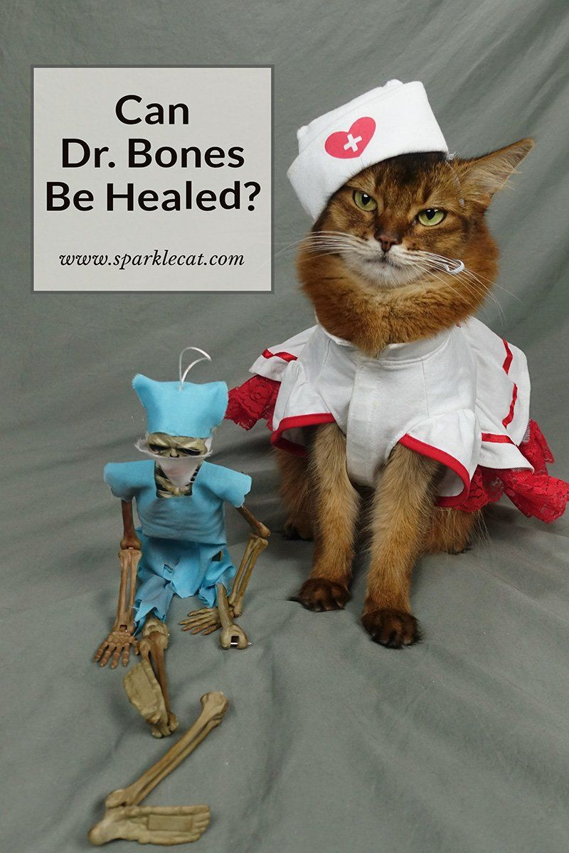 Dr Bones Has Been Injured In 2020 Funny Cat Photos Therapy Cat Funny Cats