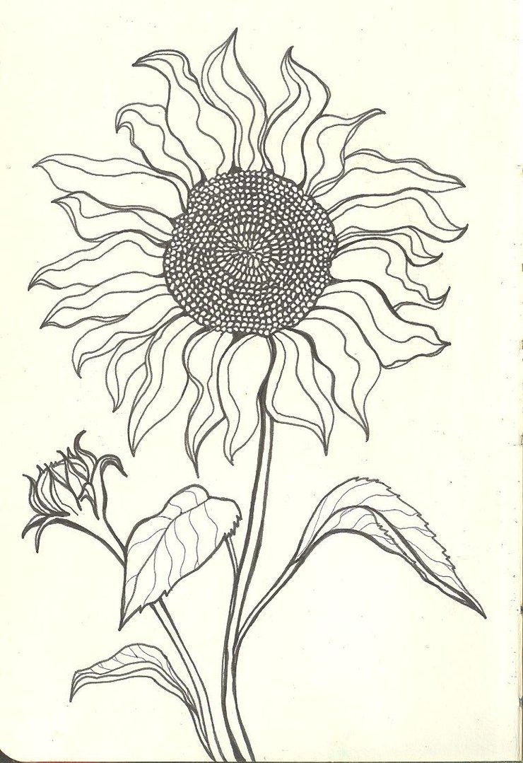 Sunflower Drawings | Sunflower Drawing Tumblr Sad sunflower by finwion