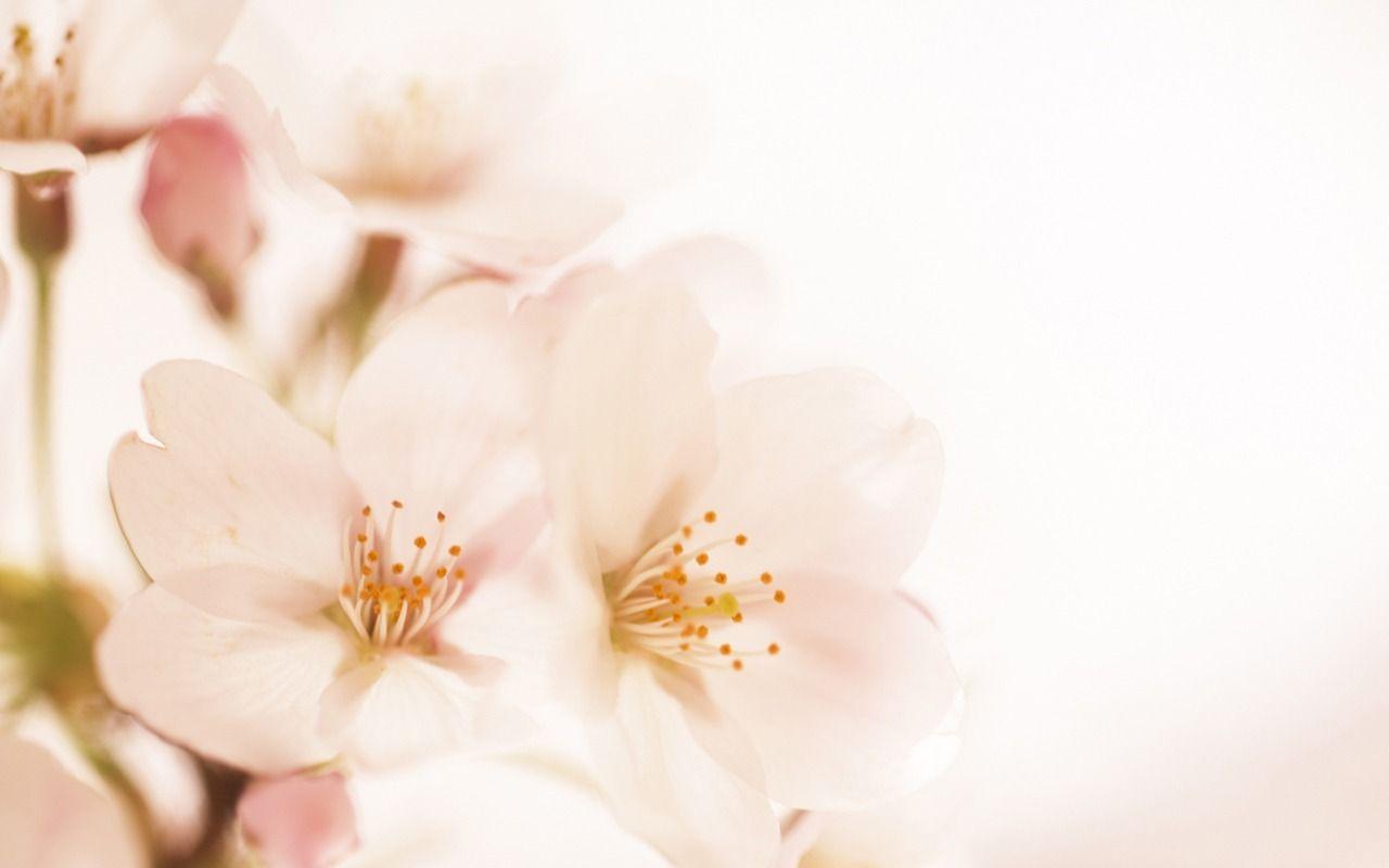 soft | Soft Focus Flowers Photography 1280*800 Wallpaper ...