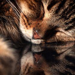 Lazy Sunday.....