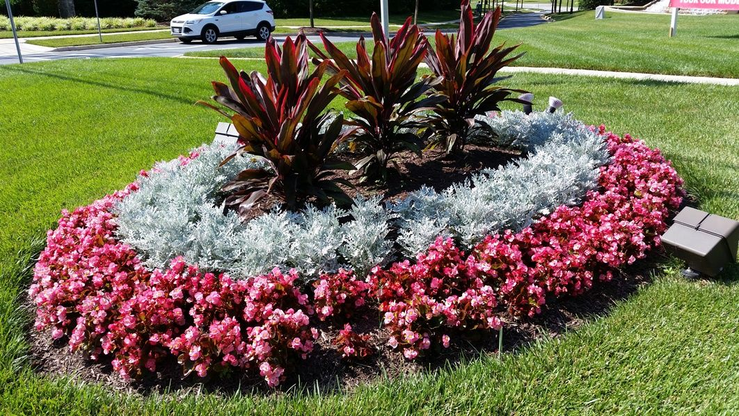 Cordyline Dusty Miller And Pink Begonia Mcfall And Berry Small Garden Landscape Beautiful Flowers Garden Palm Trees Landscaping
