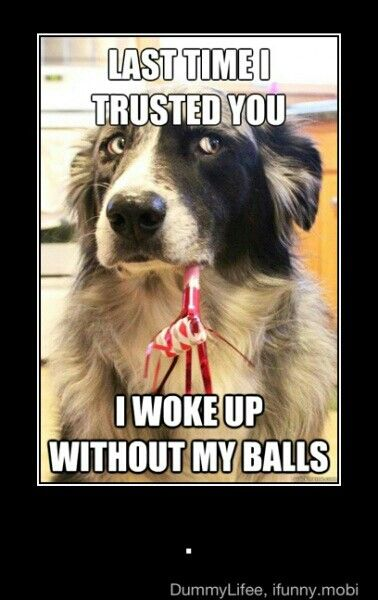 dont trust dem dog