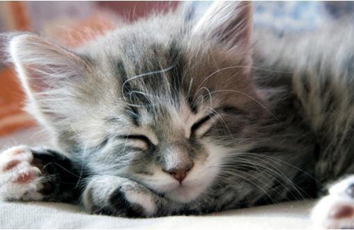 Cutest sleeping kitten? Poll Results - Kittens - Fanpop