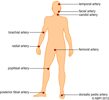 Pulse Locations On The Body