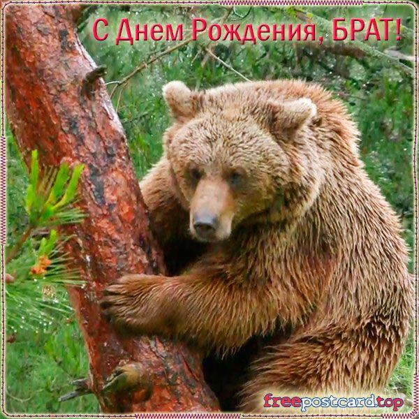 традиционные квадратные пожелание с днем рождения медведя уже несколько