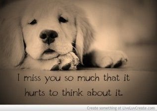 Hurt That Never Really Goes Away Puppies Cute Animals Baby Animals