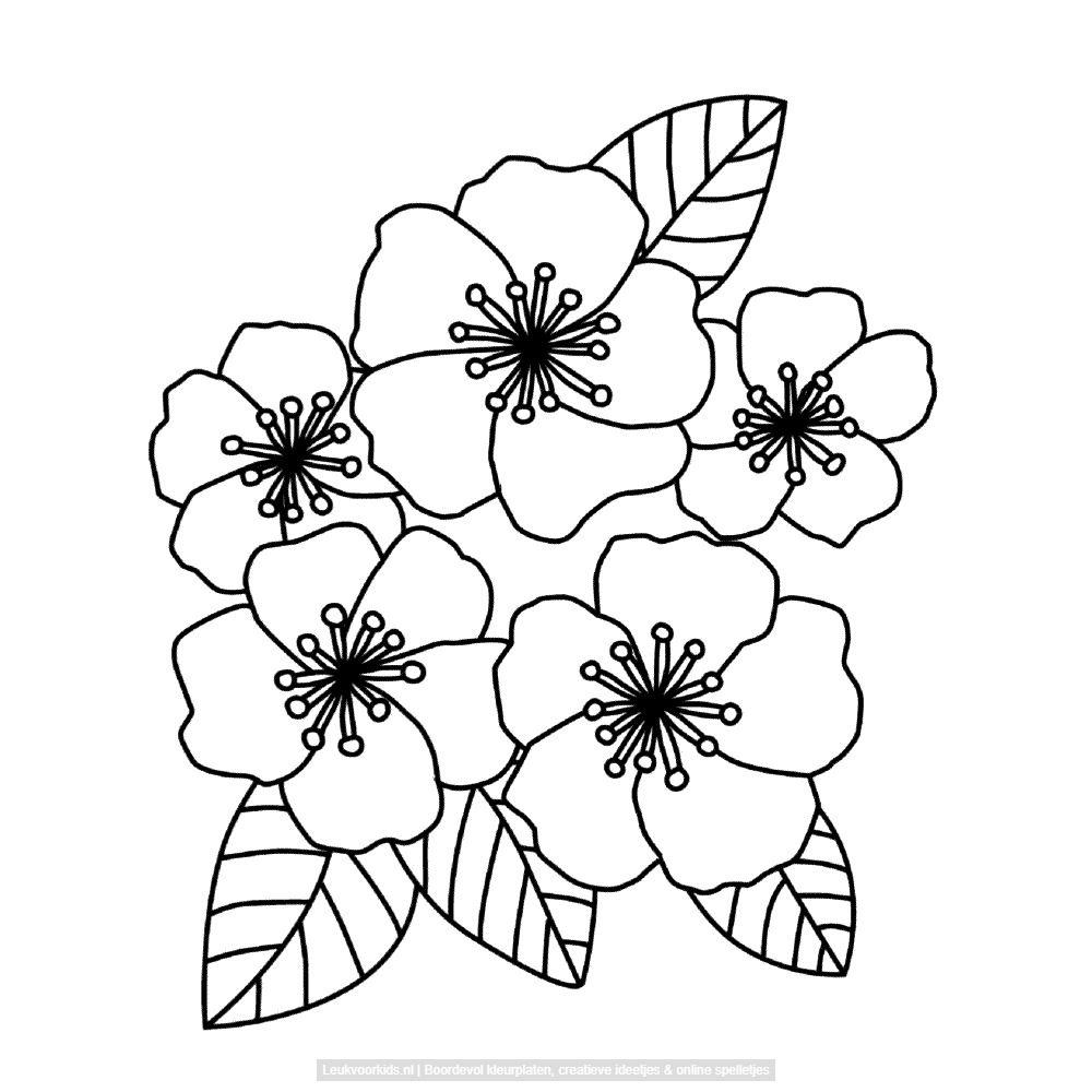 Bekijk Bloemen Kleurplaat Bloem Kleurplaten Bloemen Tekenen Kleurplaten