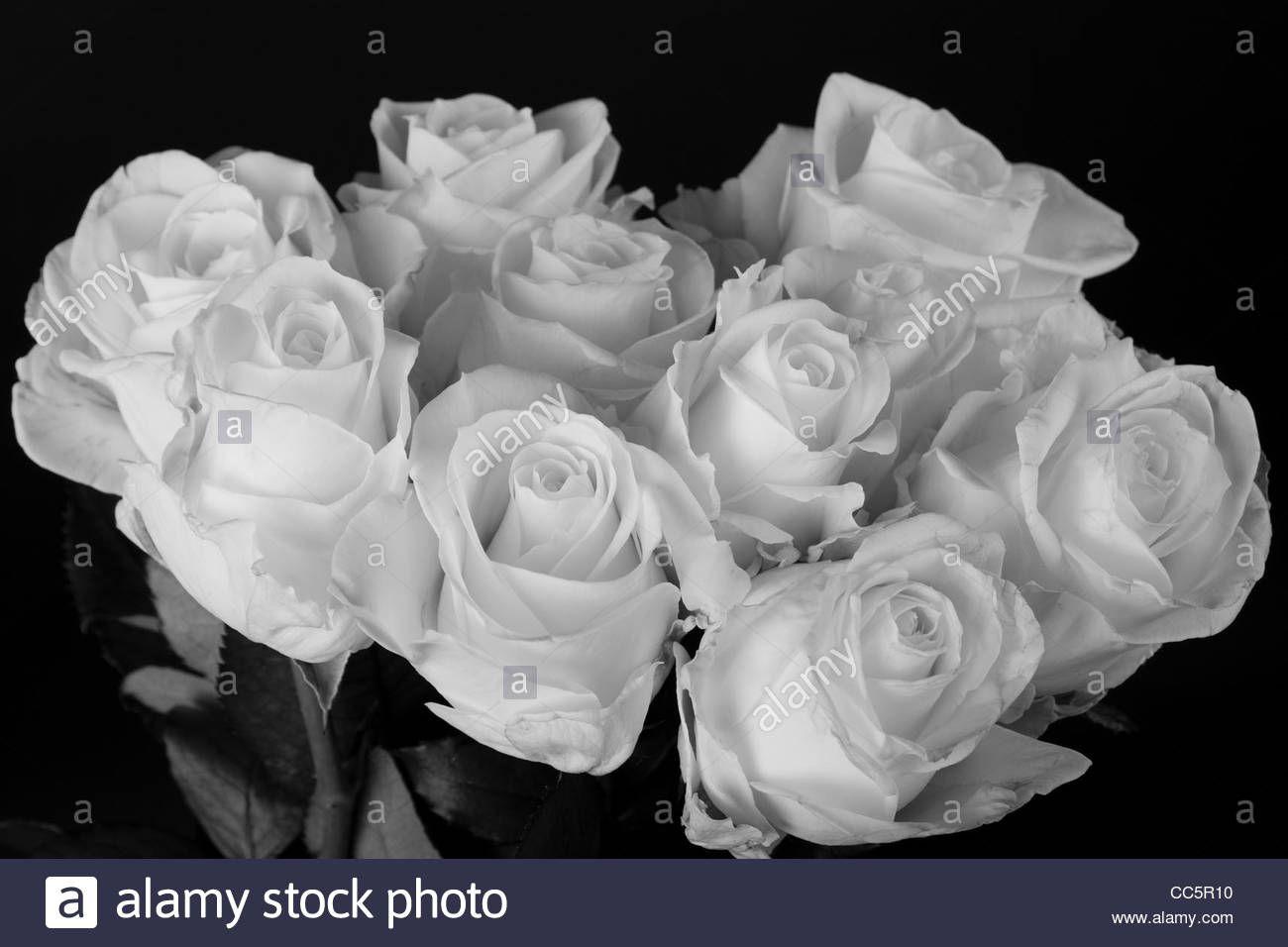 Download Wallpaper Rose Flower White Leaves Black Background S
