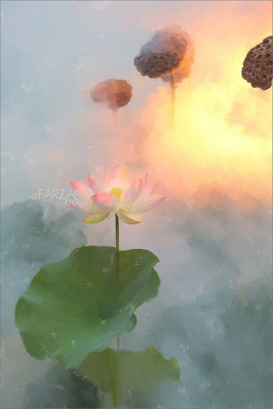 Lotus Flower Paintings Images Using Akvis Oil Paint Filter