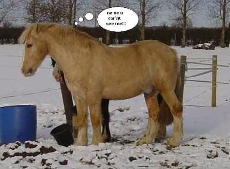 Funny Horse Slogans | related searches for funny horse ...