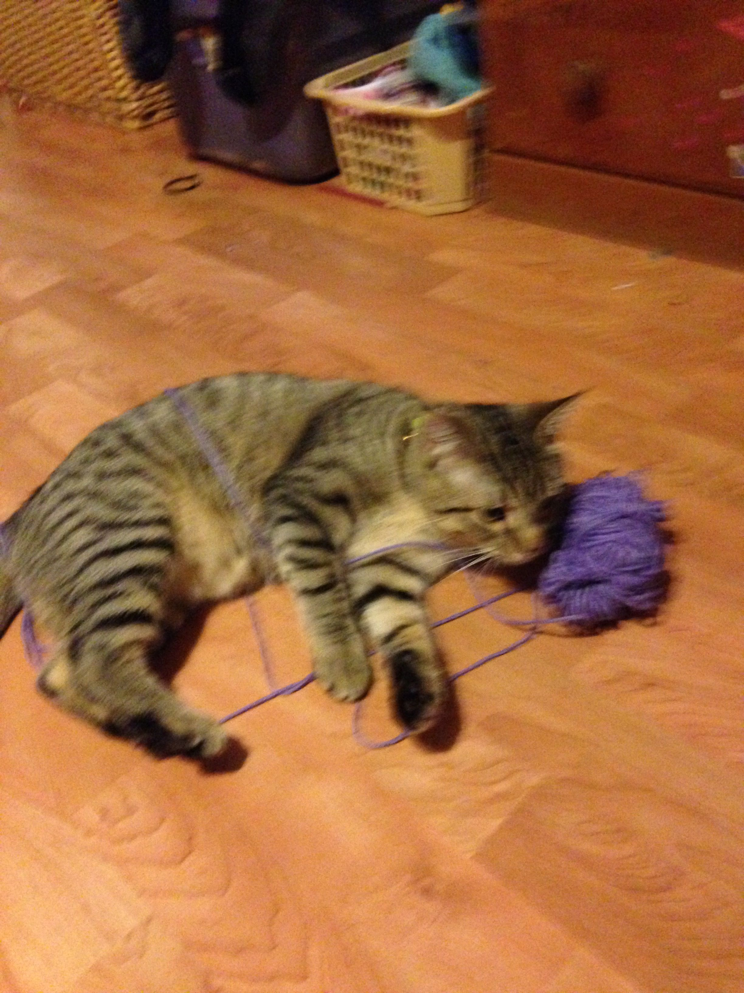 Meet Cute. The fur-ocious, yarn-eating, BEAST!!