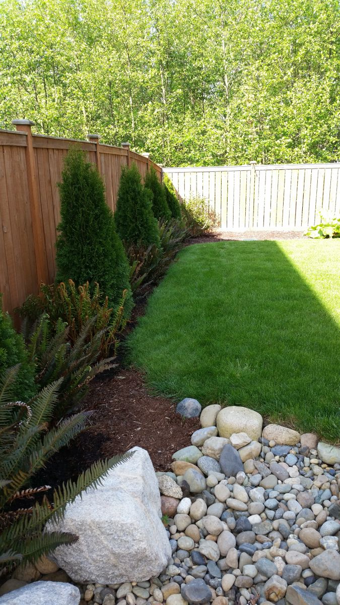 emerald green arborvitaes every 6 u0027 down the fence with two sword