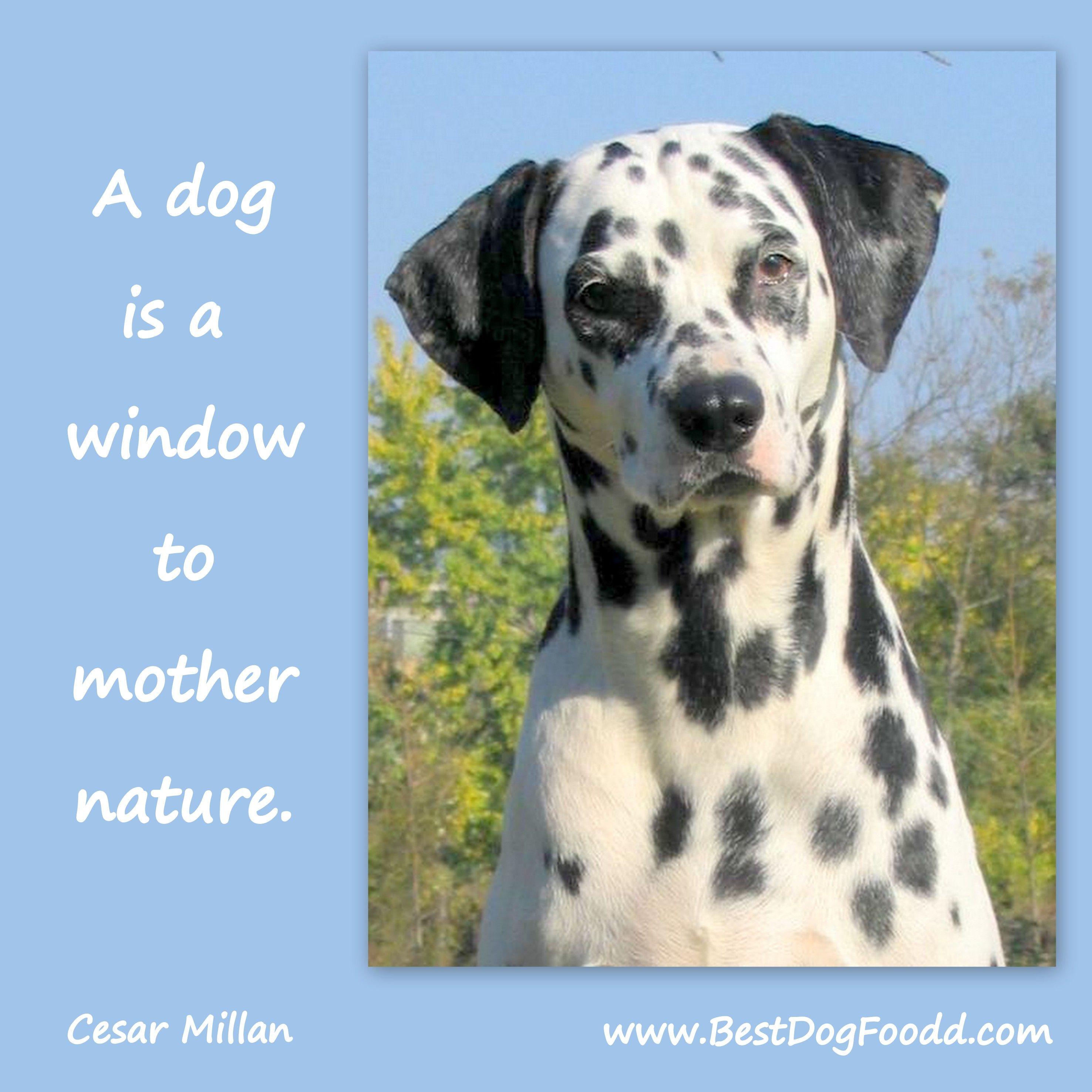 One Of My Favorite Dog Quotes By The Dog Whisperer Dog