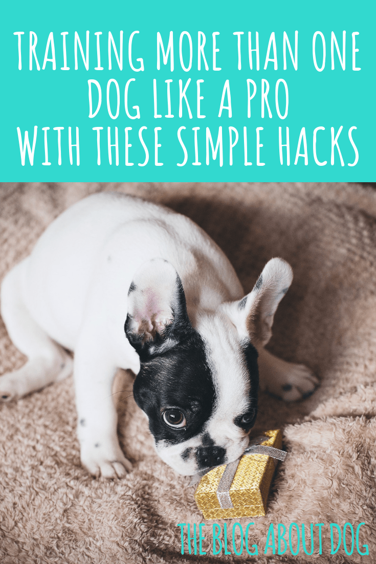 Hacks for Dog Moms to Rock the Holidays (With images