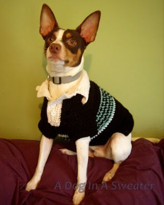 Polo Sweater ~ free pattern {A Dog In A Sweater}   crochet dog ...