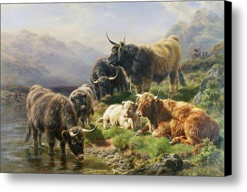 Highland Cattle Canvas Print / Canvas Art by William