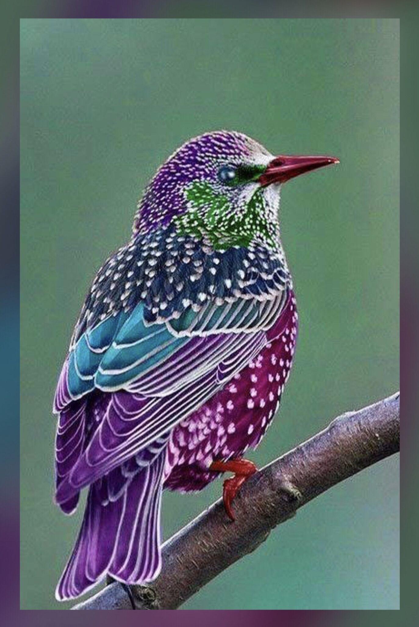 Animal Bird Of Paradise Drawing