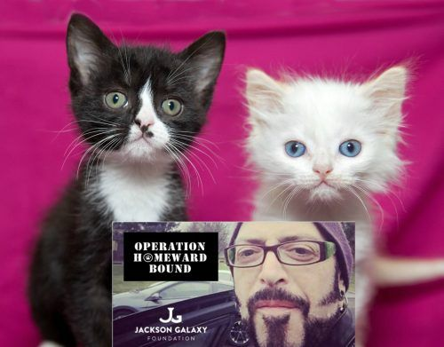 A Journey Of 1 000 Miles Jackson Galaxy Saves Dozens Of Kittens
