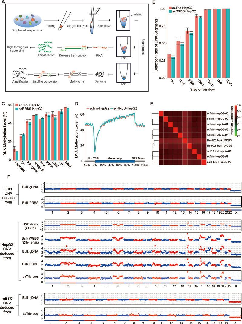 Sc Trio Seq Cell Genetics Detection