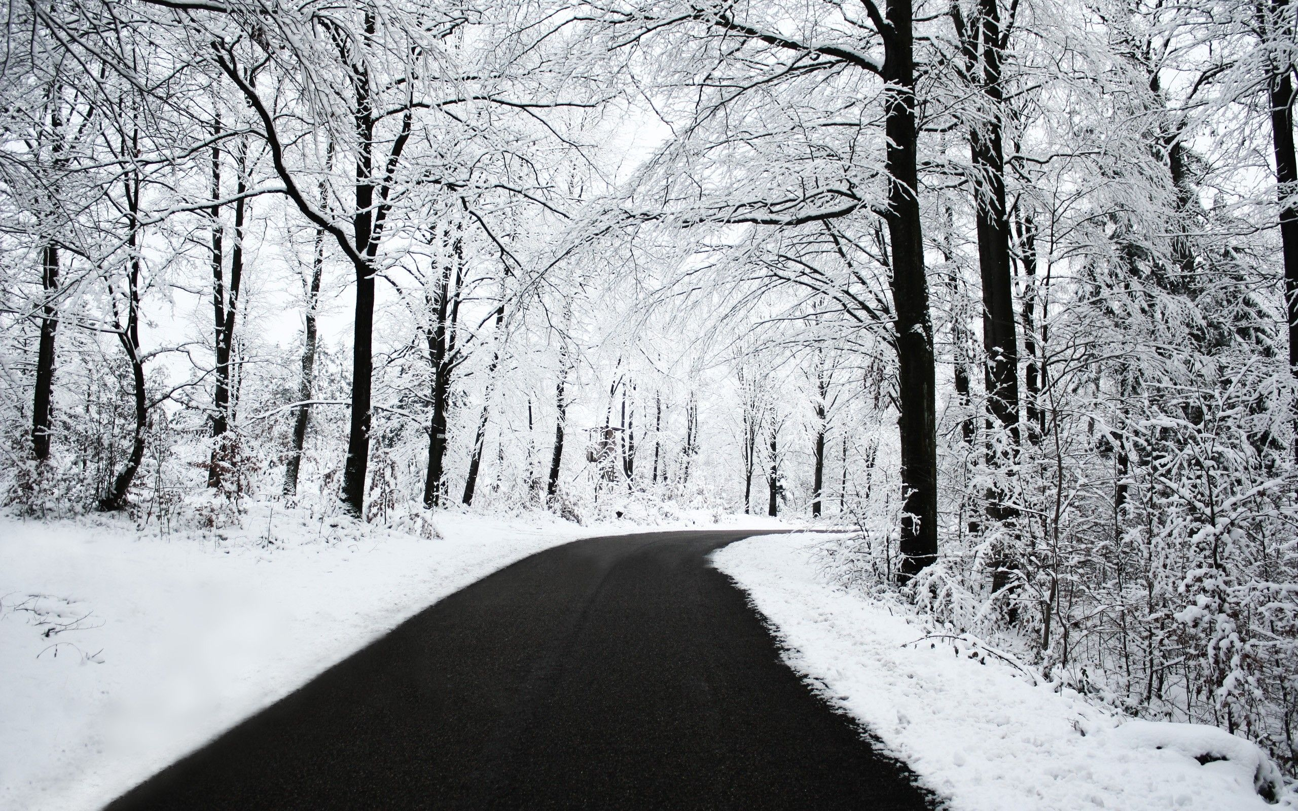 Trees Forest Road Black Snow White Nature Winter