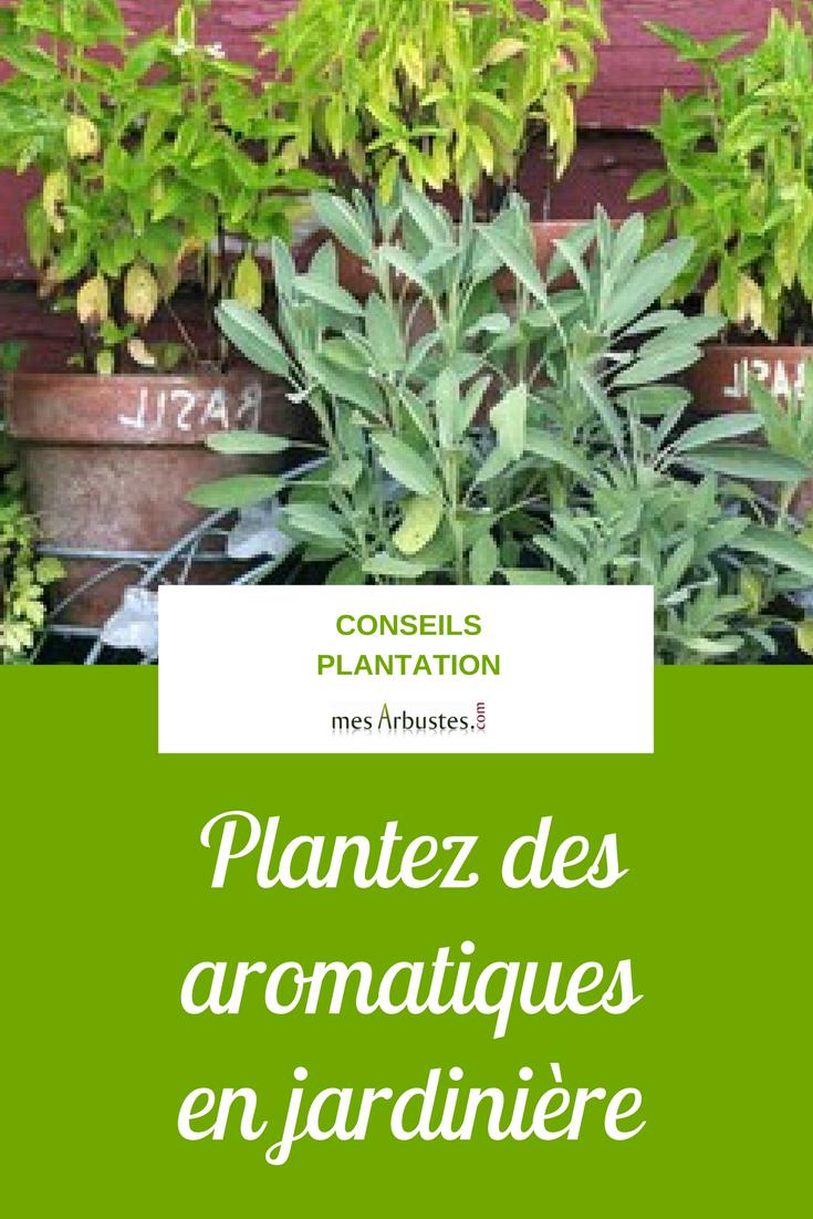 Plantes Aromatiques En Jardinière pour profiter de vos plantes aromatiques tout au long de l