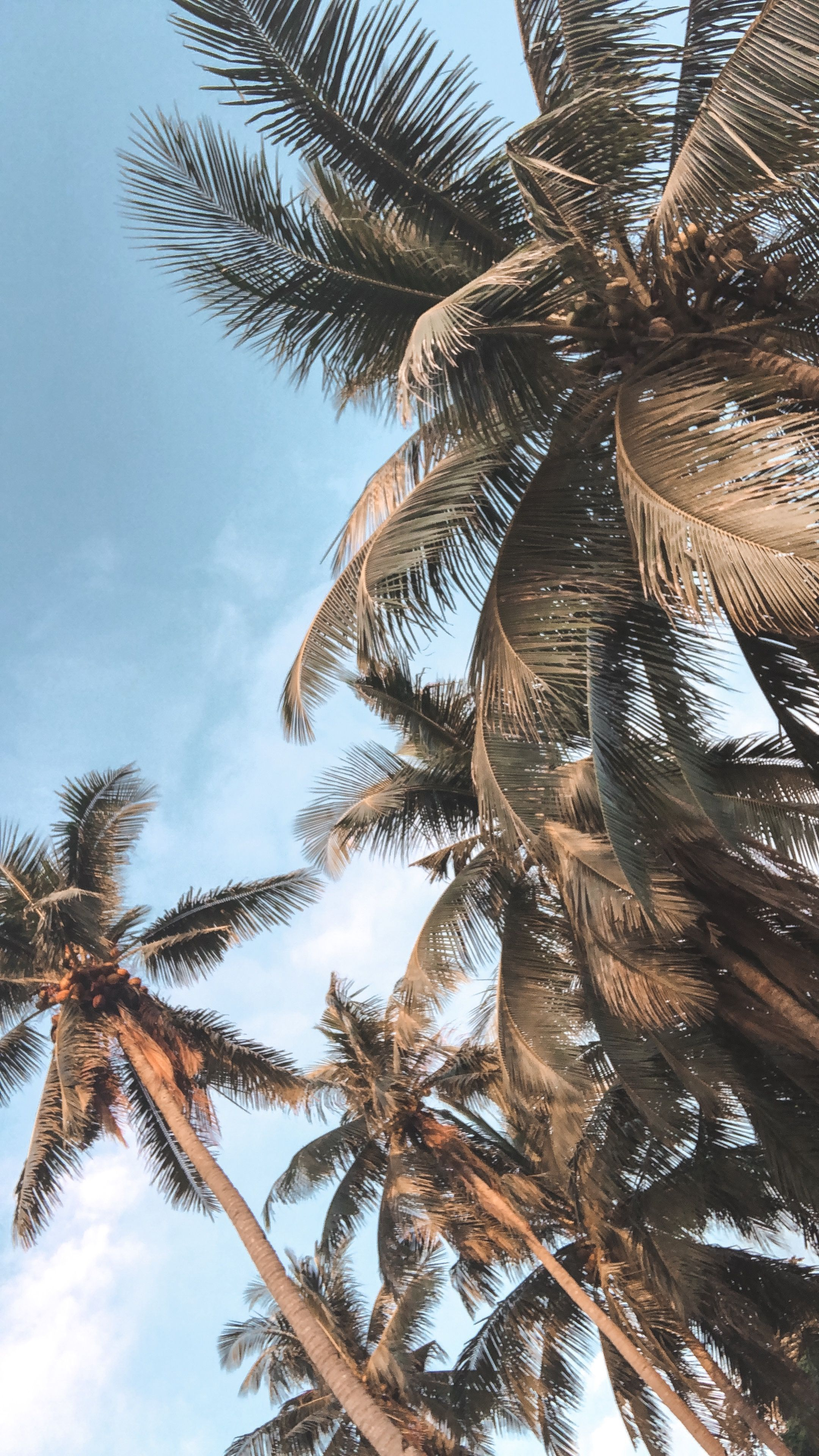 20 Wallpaper Summer Backgrounds Palm Trees In