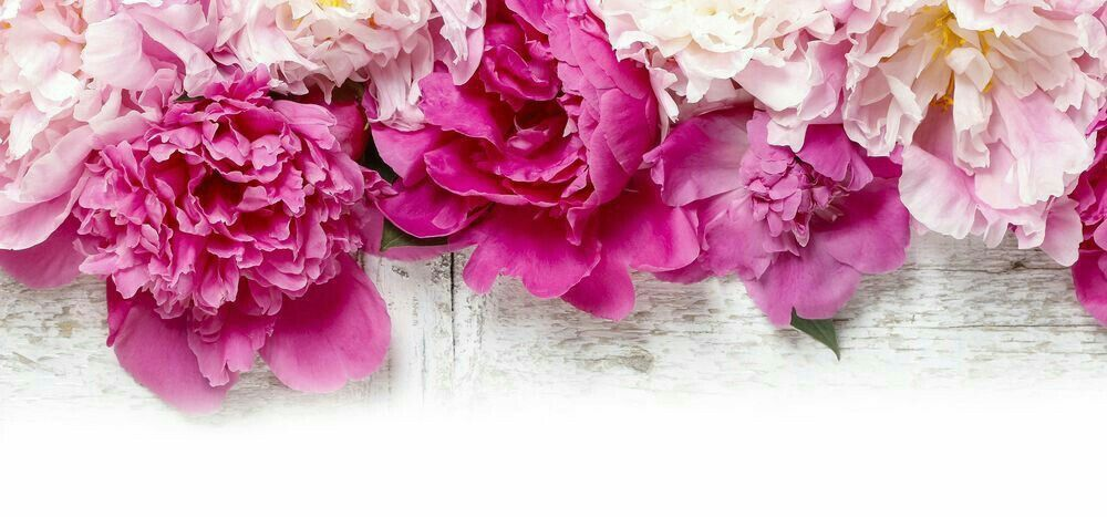Floral Facebook Covers: Cover Photos For FB