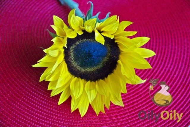 Sunflower Oil Allergy Are You At Risk Allergies Sunflower Oil Sunflower