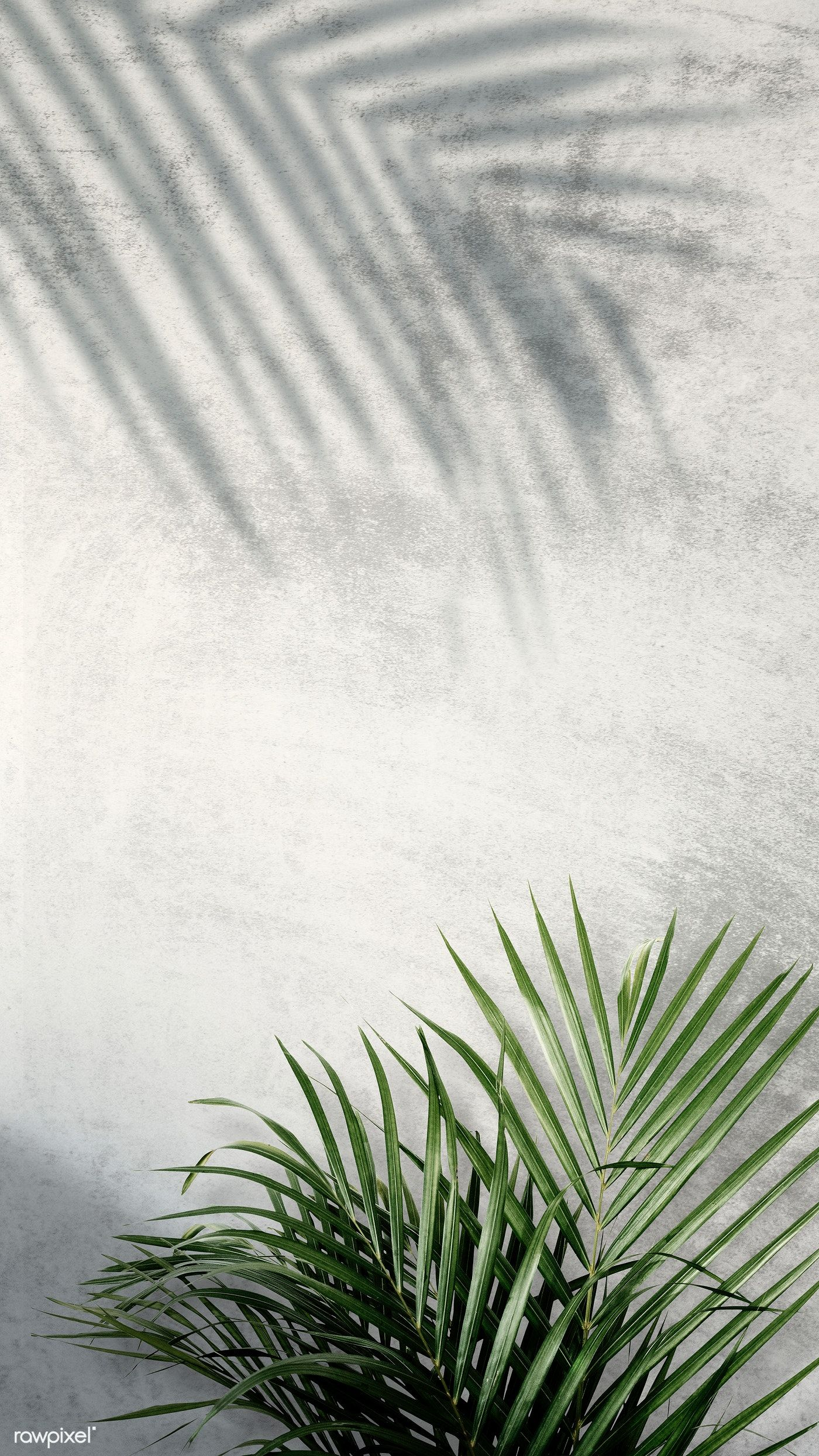 Download premium psd of Areca palm shadows on a gray wall 599964