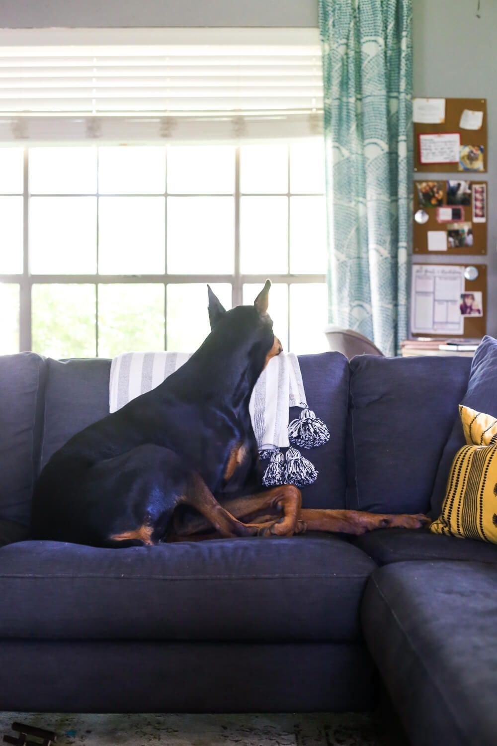 6 tips for decorating with kids and pets home yard decor rh pinterest com