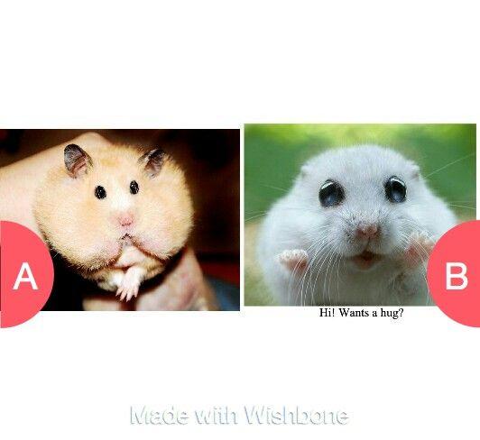 Hamsters!!