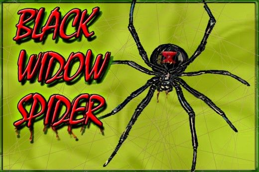 ff0c458f13546f1178327bb8bf2cb56f - How To Get Rid Of Spiders In Side Mirror