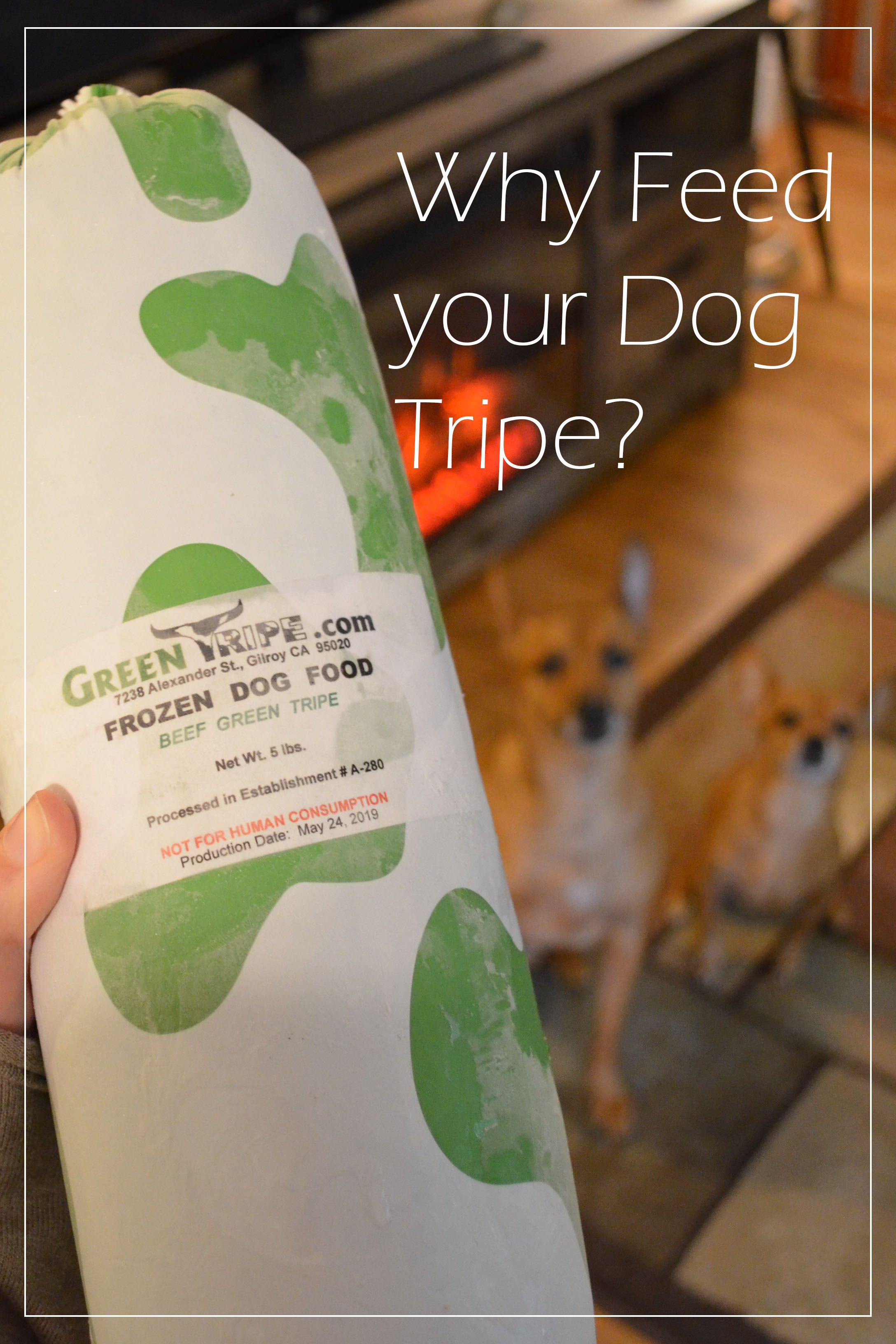 These Two Pups Go Crazy Over Raw Green Tripe Packed With