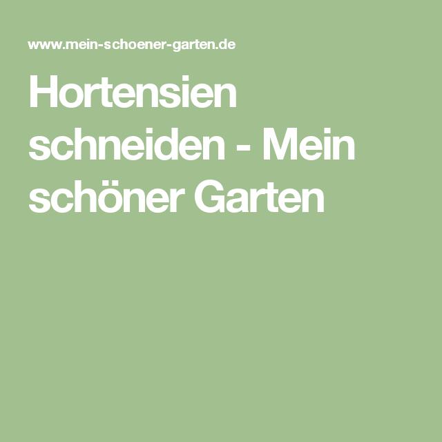 Hortensien Richtig Schneiden Hortensien Apfelbaume Schneiden Saulenobst Schneiden