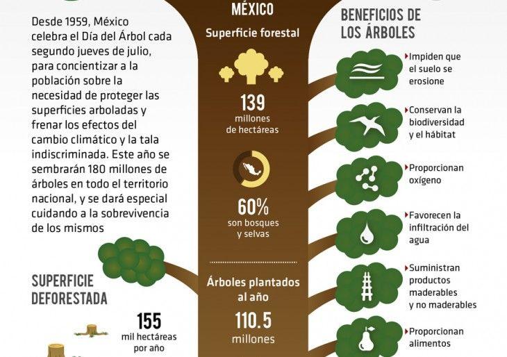 Poesias Dia Del Arbol Buscar Con Google Dia Del Arbol Arboles La Biodiversidad
