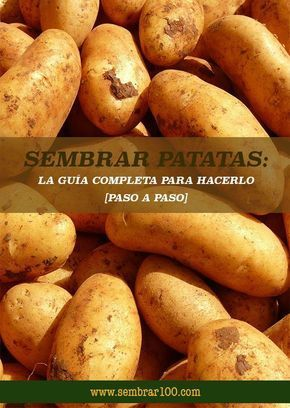 Patatas #patiodepapas