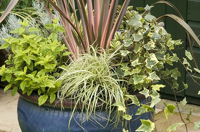 Colourful Evergreens Shrubs For Winter Colour Foliage