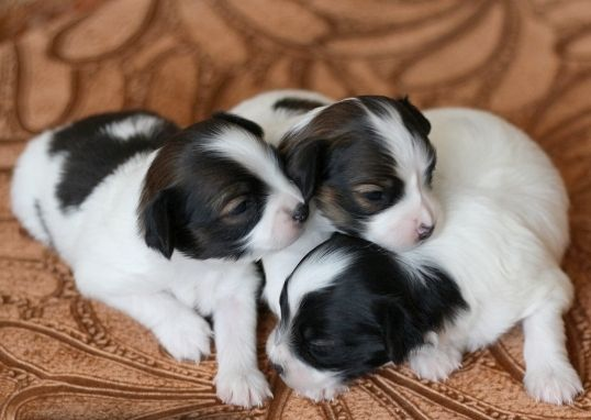 7 Cute Do Puppies Have Umbilical Cords