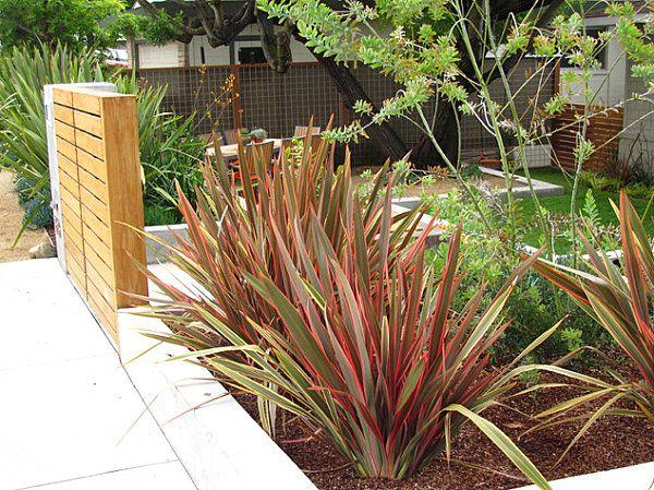 modern landscaping plants - Google Search