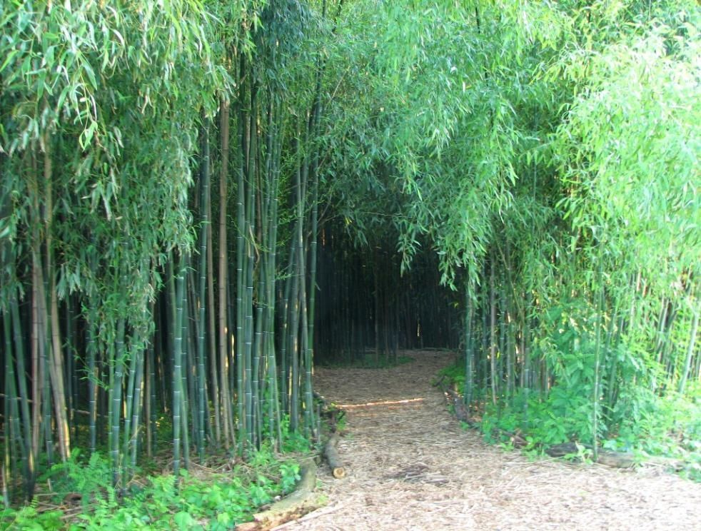 The Official Botanic Garden Of Rutgers: Bamboo Forest, Rutgers Garden, New Brunswick, Nj