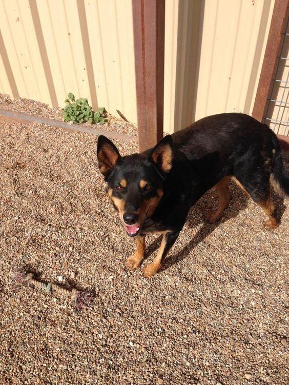 Adopt Sasha On Will You Adopt Me Signed Rescue Pet Adoption