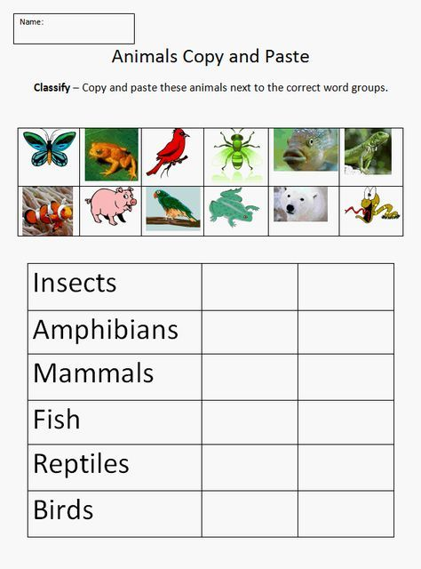 Copy And Paste Classifying Animals K 5 Computer Lab Technology